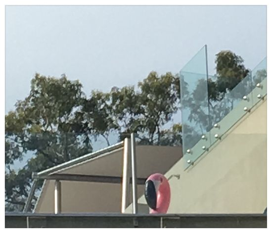 """""""Surveillance operative"""" 2 January 2017 IPhone 6s+ Pictureshown Noosa"""
