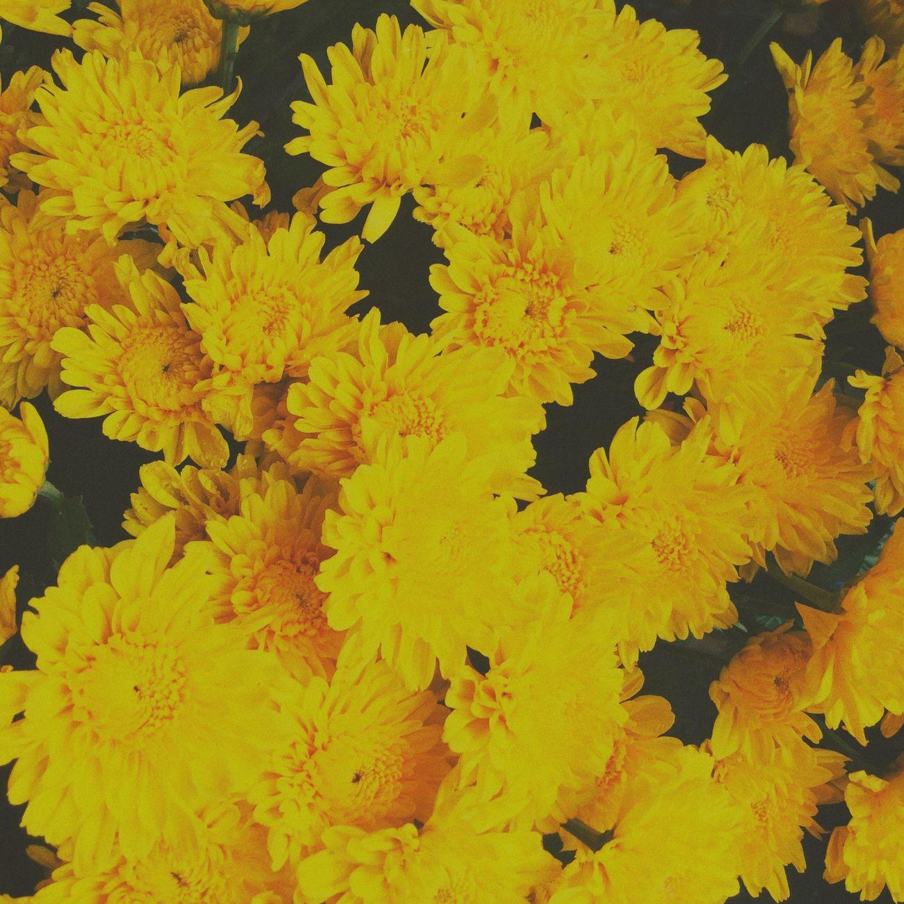 Yellow Taking Photos Cebu