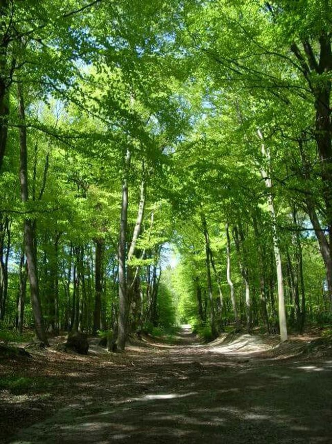 Billerbeck Wood Nature Nature_collection