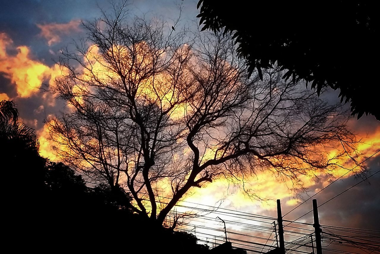 Sunset Sky Silhouette Dusk Nature Tree No People Beauty In Nature Outdoors Close-up Day Cityscape EyeEm Best Shots Contrast Orange