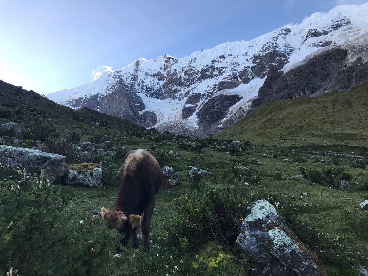 Humantay Mountain Snow Cow Nature Nature Photography PeruvianAndes Art Is Everywhere