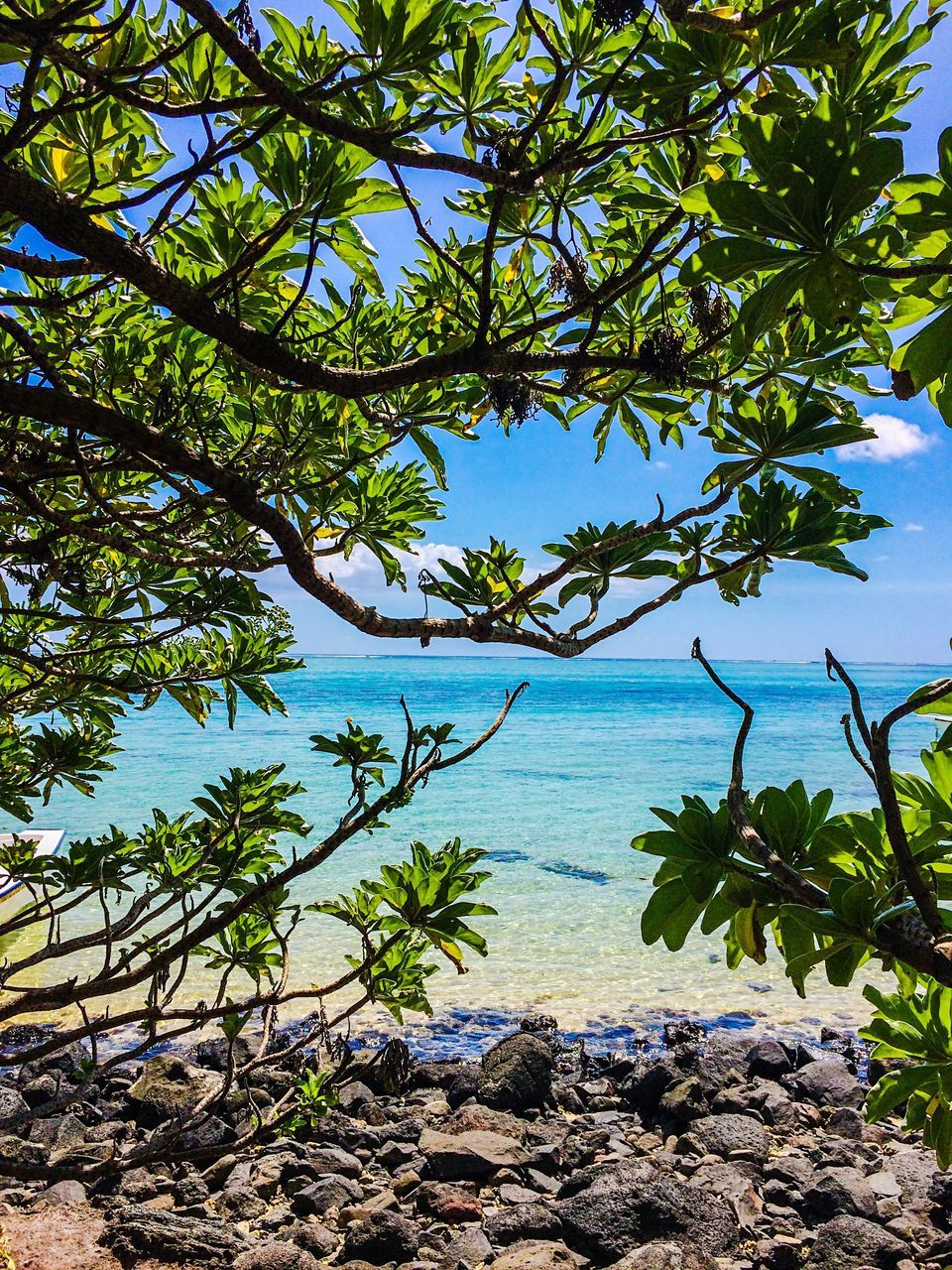 nature, tree, beauty in nature, sea, tranquility, tranquil scene, water, scenics, day, outdoors, idyllic, growth, blue, beach, no people, horizon over water, sky, palm tree, plant, leaf, branch
