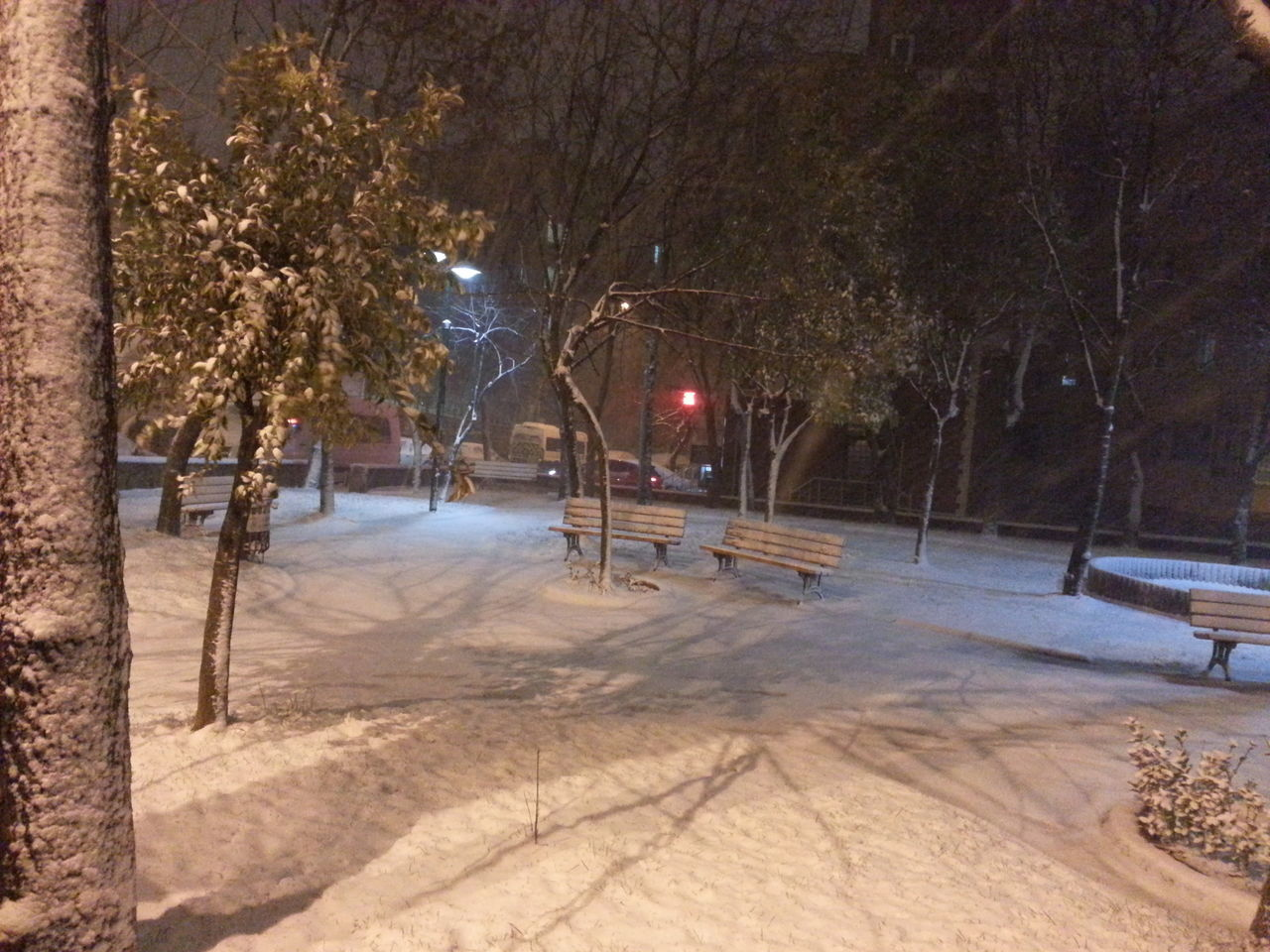 tree, winter, snow, cold temperature, nature, outdoors, night, bare tree, beauty in nature, no people