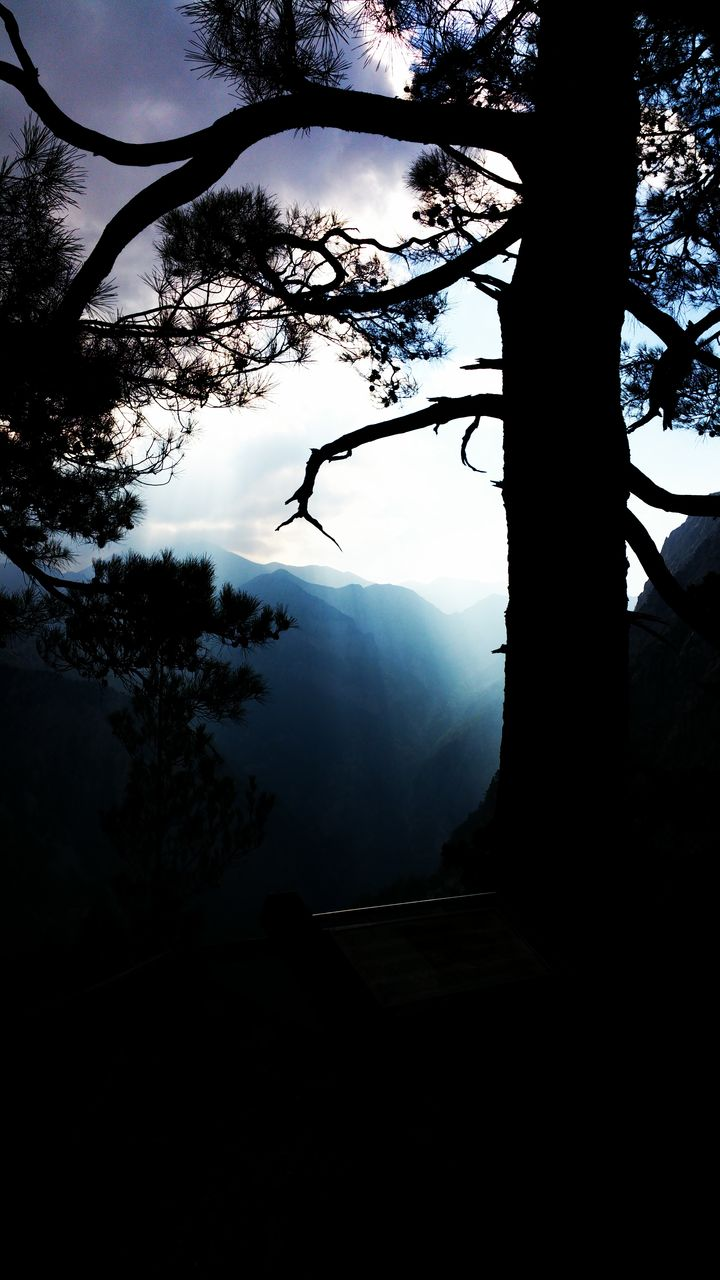 tree, silhouette, nature, mountain, no people, branch, sky, beauty in nature, tranquil scene, day, tranquility, outdoors