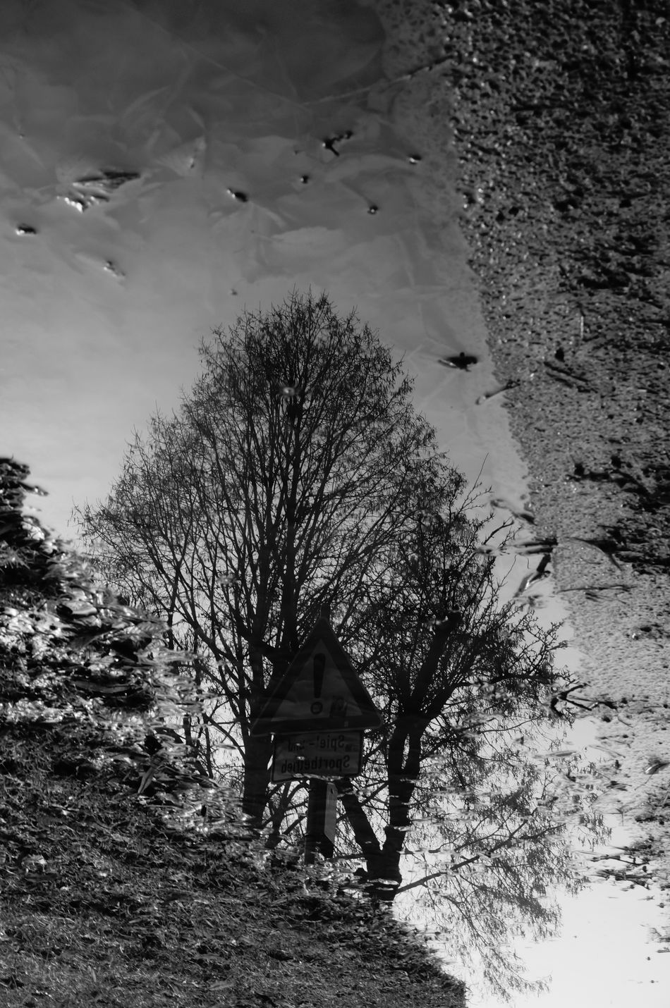 Water Tree Outdoors Nature Sky Day No People Fog Black & White Black And White Nature Reflection Overhead Over Head Over Head View Optical Illusions Optical Illusion