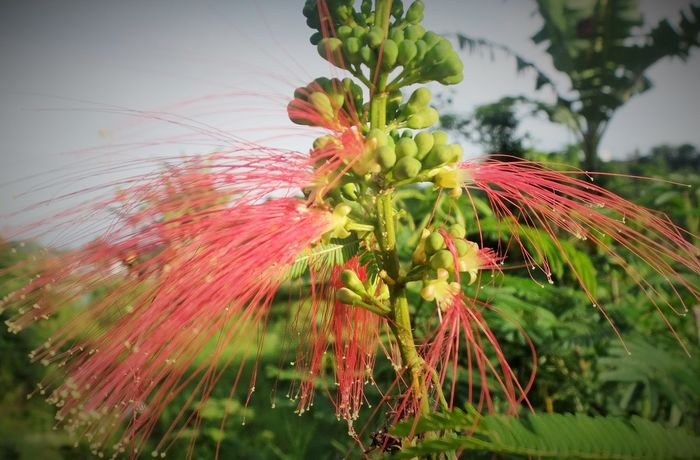 #fireworks #flowers #Garden Beauty In Nature Flower Freshness Growth Nature No People Outdoors Plant