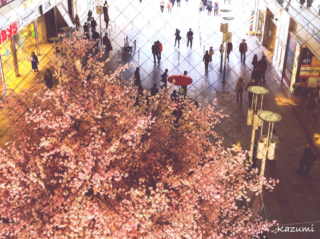 待ちきれないから、なんちゃって桜🌸 Real People Flower Large Group Of People Outdoors Men Women Day Nature Architecture Sky People Cherry Blossoms Cherry Blossoms 🌸🌸 Cherry Blossoms In Japan IPhone IPhoneography Iphoneonly Japan