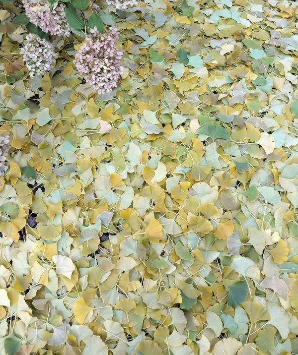 Autumn leaf carpet Autumn Leaves, Light And Shadow Nature, Colors, Autumn, leaves, green, yellow, mellow, serene, serenity, background, patina, soft, softness, fall, season,