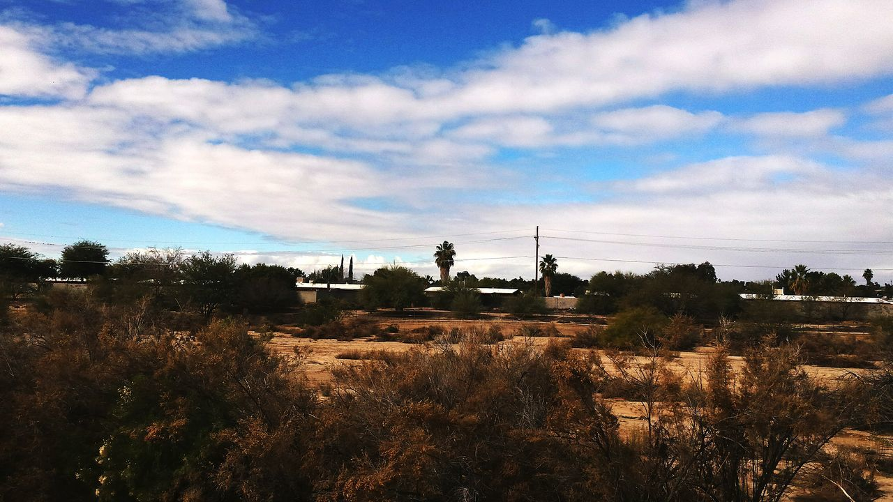 Tranquil Scene Sky Tranquility Scenics Landscape Beauty In Nature Non-urban Scene Solitude Remote Outdoors Day Cloudy Plant Cloud - Sky Growth Nature EyeEm Nature Lover Arid Climate Arizona Landscape