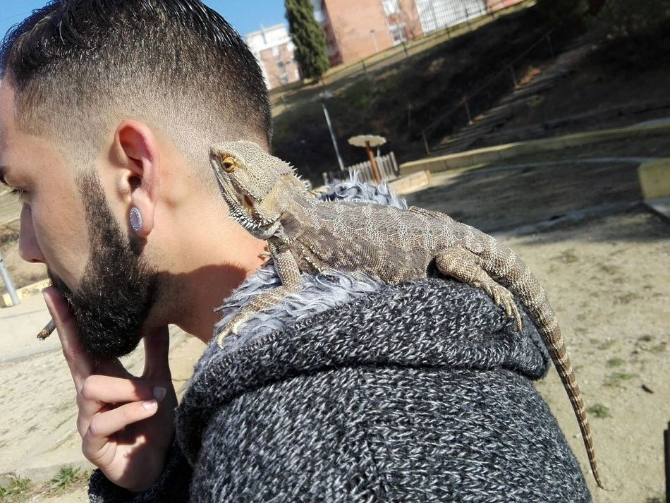 One Person Young Adult Day Only Men Men Lifestyles Pogona Pogona Vitticeps Barcelona Domestic Animals