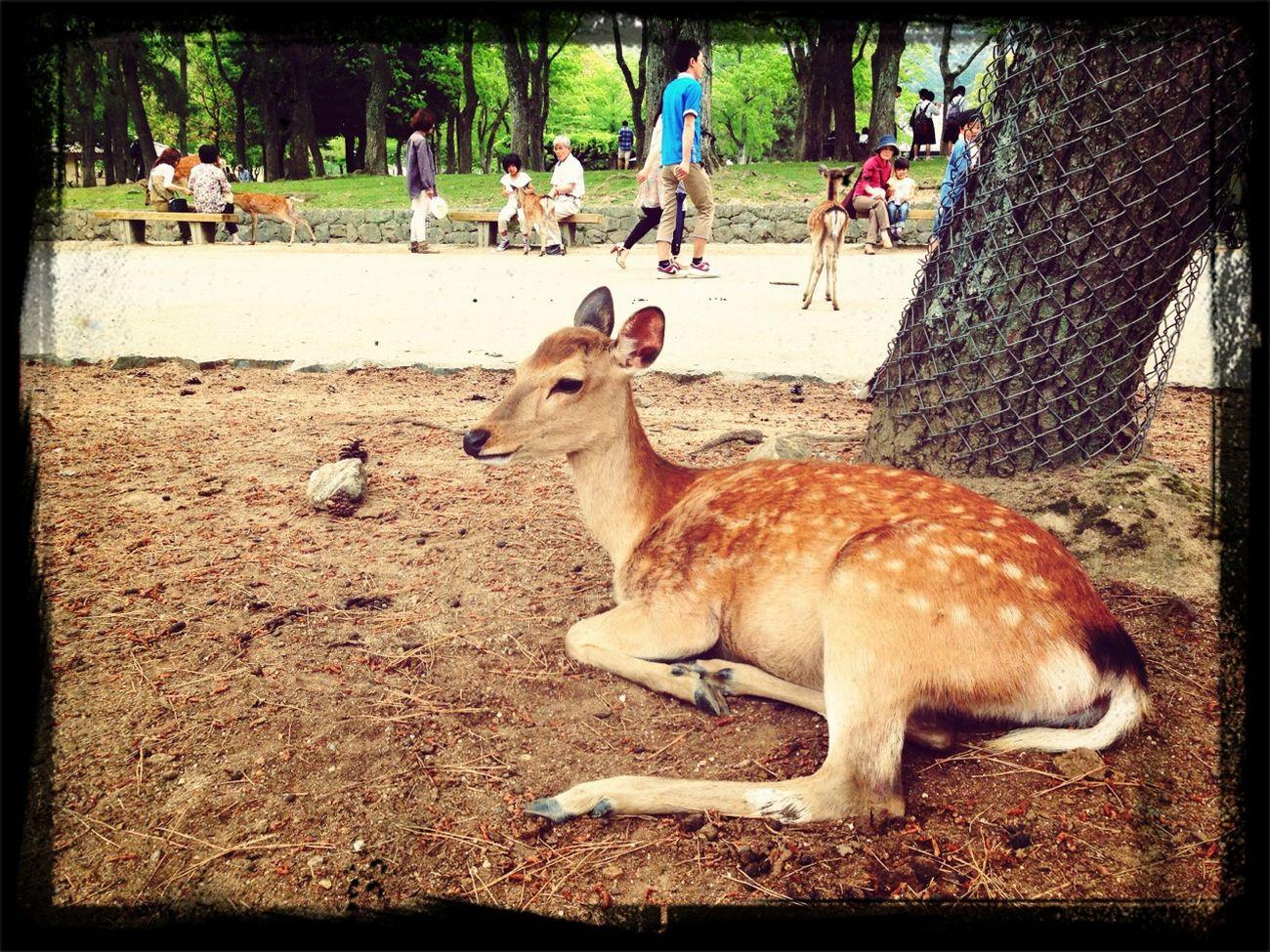 Venaditos En Nara