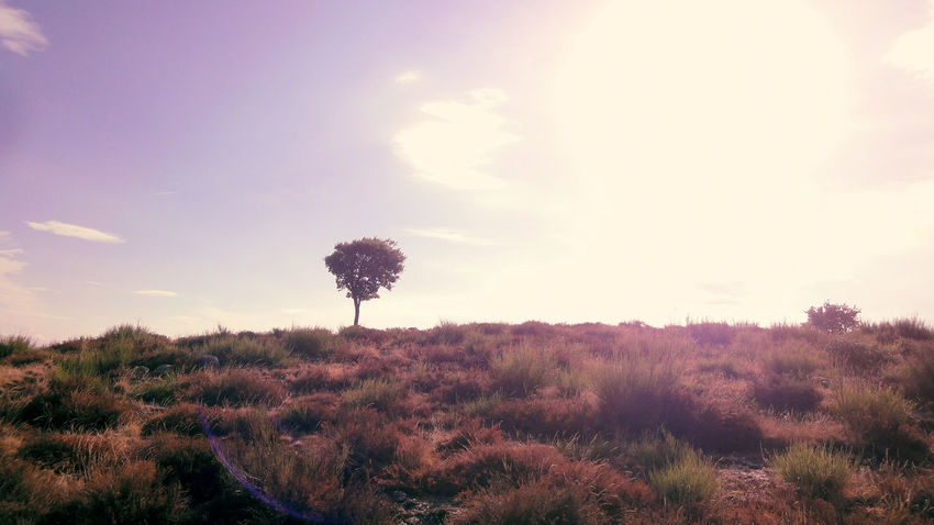 Atmospheric Mood Beauty In Nature Field France Grass Grassy Heath Heather Heide Hicking Horizon Over Land L'Estréchure Landscape Light Lonly Tree Majestic Nature Outdoors Provence Sky Tranquility Tree