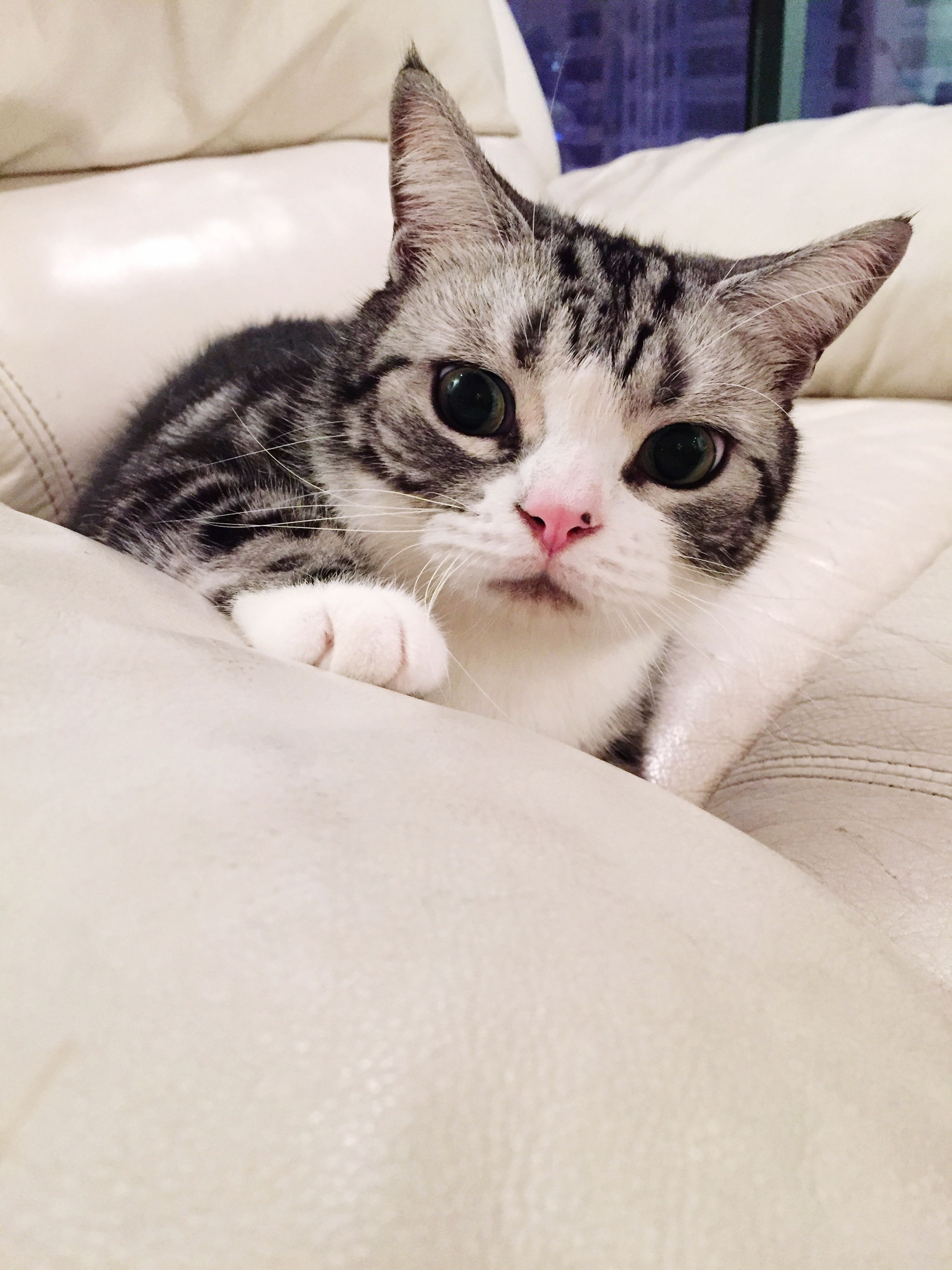 domestic cat, pets, domestic animals, cat, animal themes, one animal, feline, mammal, portrait, indoors, looking at camera, whisker, relaxation, bed, close-up, lying down, resting, staring, alertness, home interior