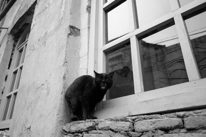 Cat Streetphotography Monochrome Fujifilm_xseries Urban Traveling BLackCat Theeth Sharp Tbilisi EyeEm Best Shots