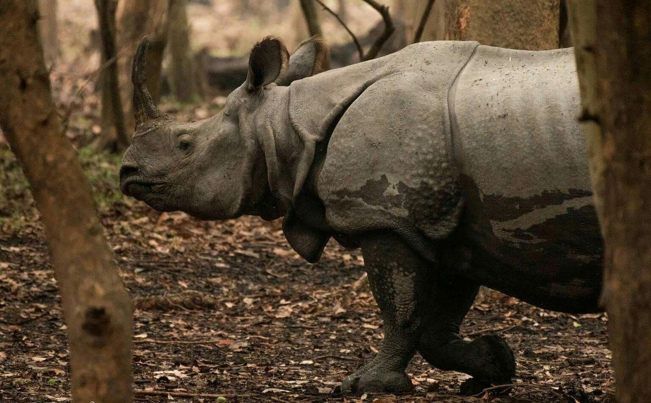 Wildlife & Nature Animals In The Wild One Horned Rhino Northeastindia Wildlife Photography One Animal Animal Trunk