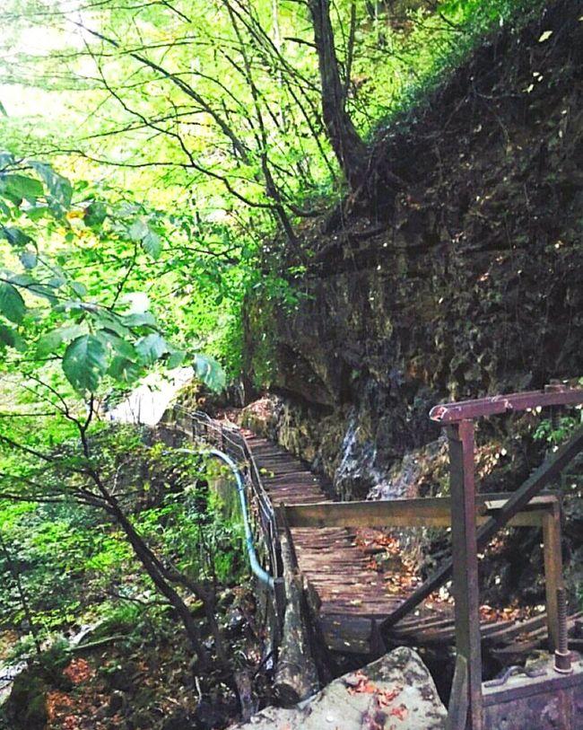 Turkey Oylat Seyyah Green EyeEm Nature Lover Nature Photography Greentrees Beatiful First Eyeem Photo EyeEm Best Shots Doğa Doğayürüyüşü Yeşillik Agaclar Autumn🍁🍁🍁 Autumn Sonbahar Dogaharikasi