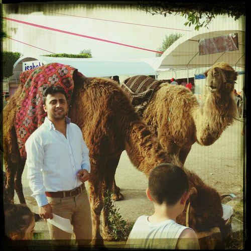 Camel Sun Kermess NOMAD