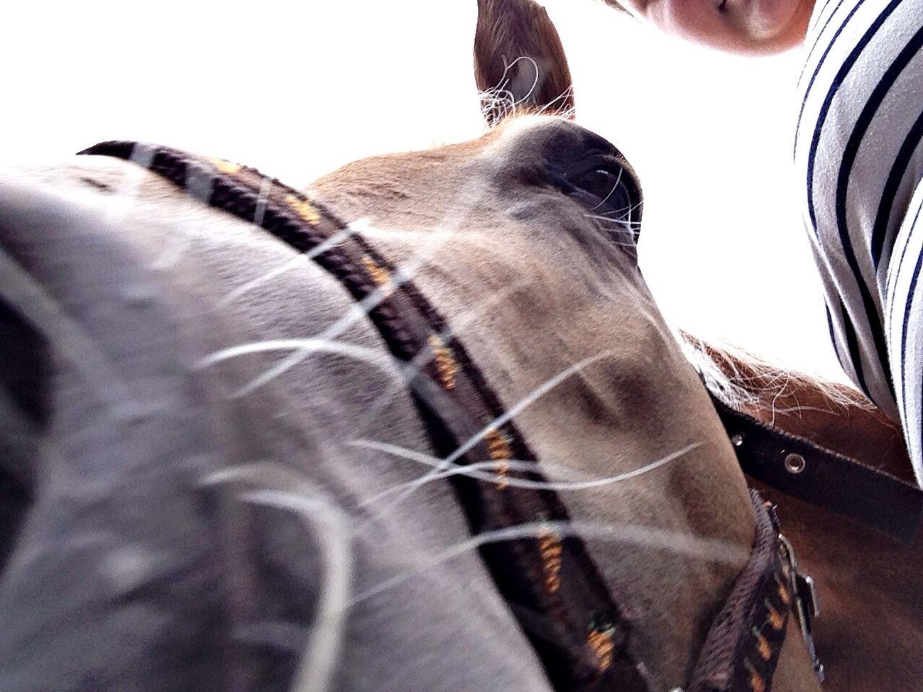 Horse Armani❤ Love ♥ ☺️