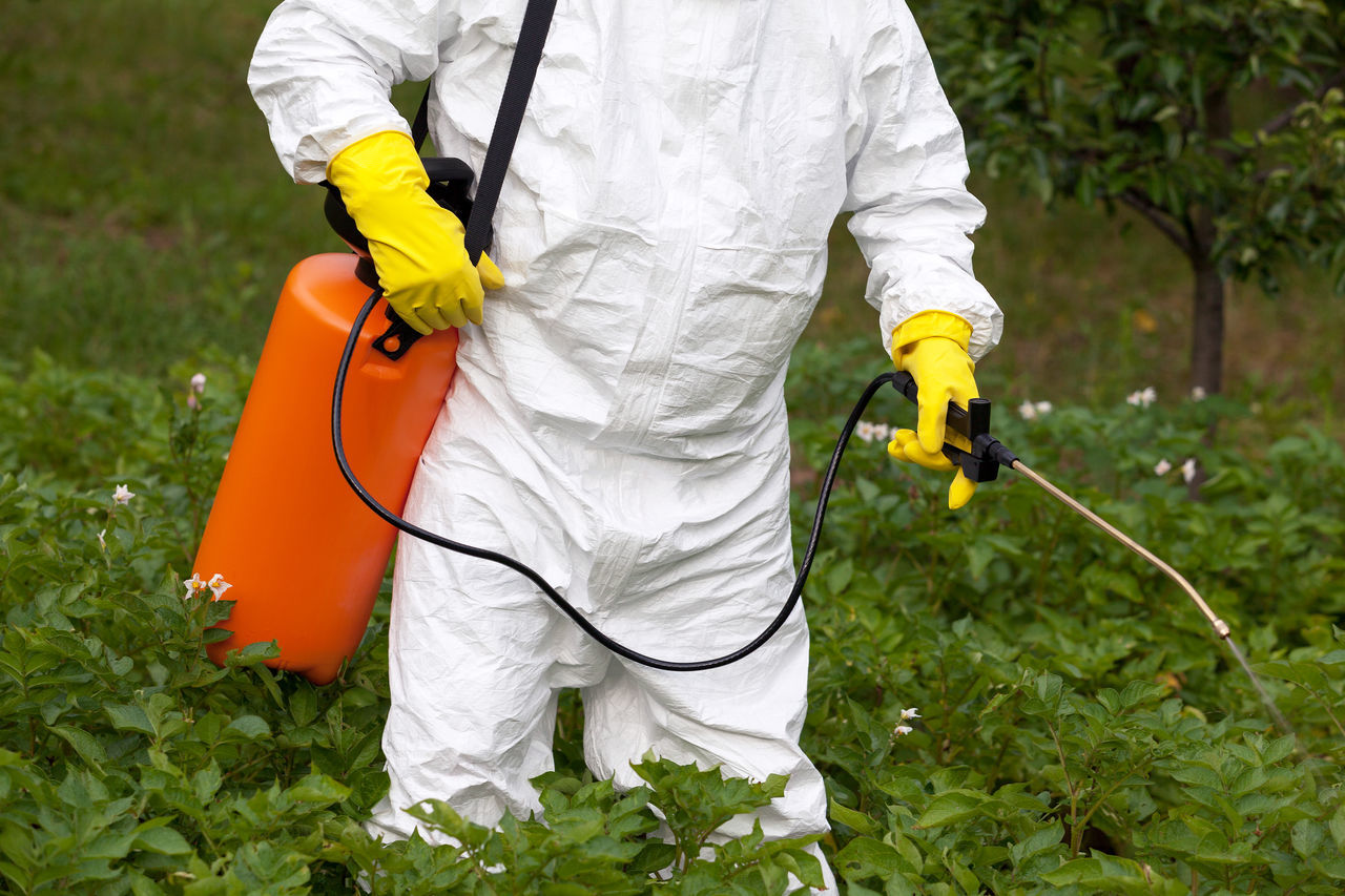 Man spraying toxic pesticides or insecticides in vegetable garden Adult Far Farm Fertilizer Field Garden Growth Healthy Eating Herbicide Non Organic Nozzle One Person Outdoors People Pollution Protective Glove Protective Workwear Toxic