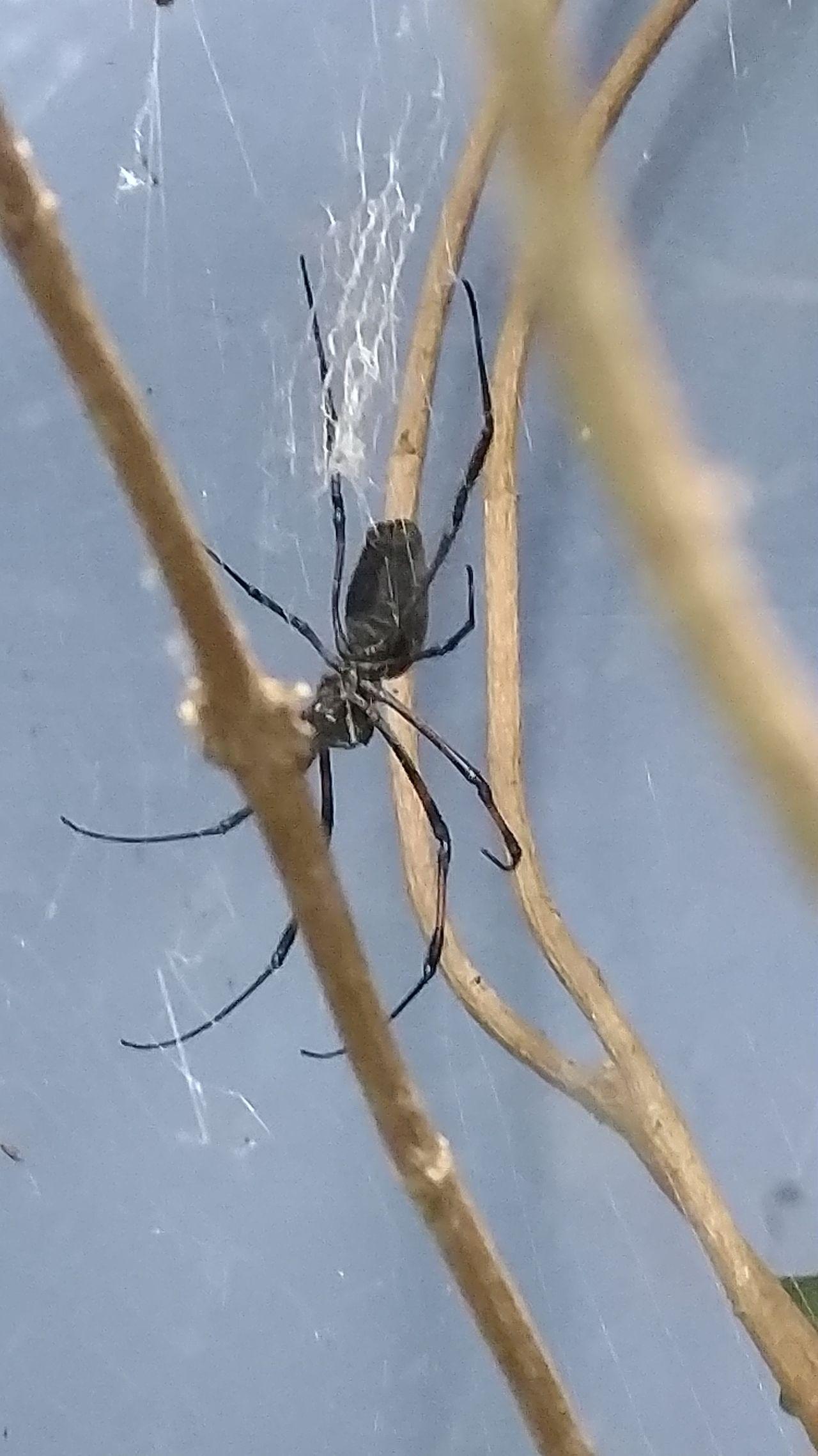 Black Spider Spider Spiderweb Art Is Everywhere The Secret Spaces