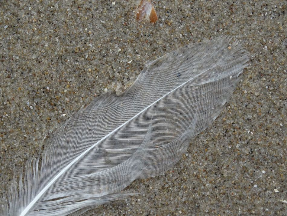 Sand Beauty In Nature Beachphotography Feather_perfection Feather  Thenetherlands Netherlands Texel  Texelpics Texelstrand