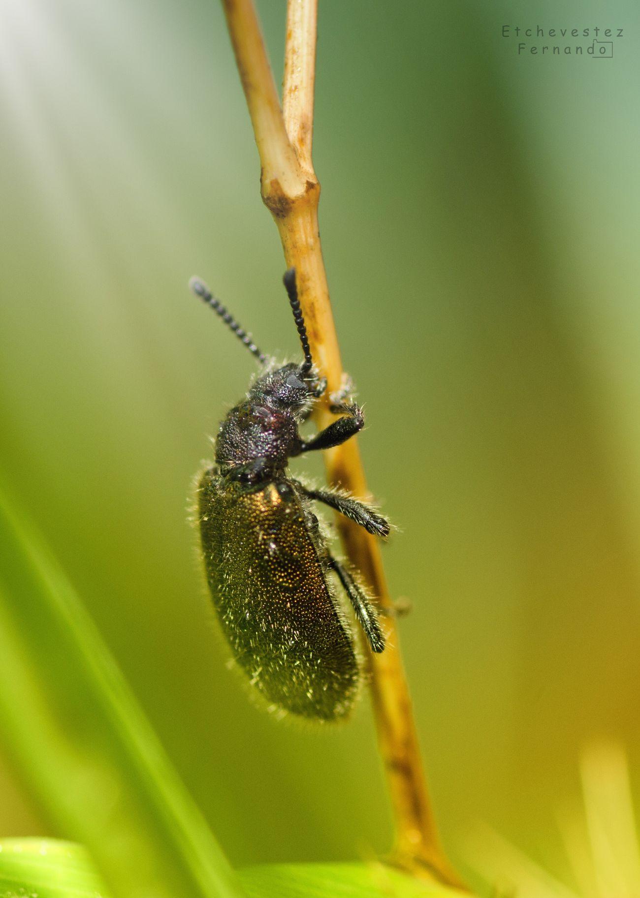 Beetle Drops Rainy Days Macro Photography Naturelovers