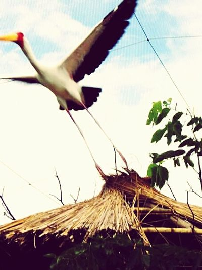 Nuevo intento de escape. Straw Animals Feathers Bird