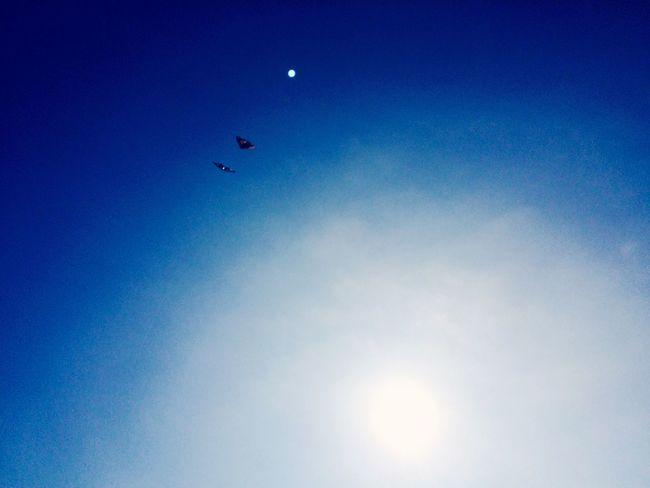 Volantines navegando en el cielo First Eyeem Photo