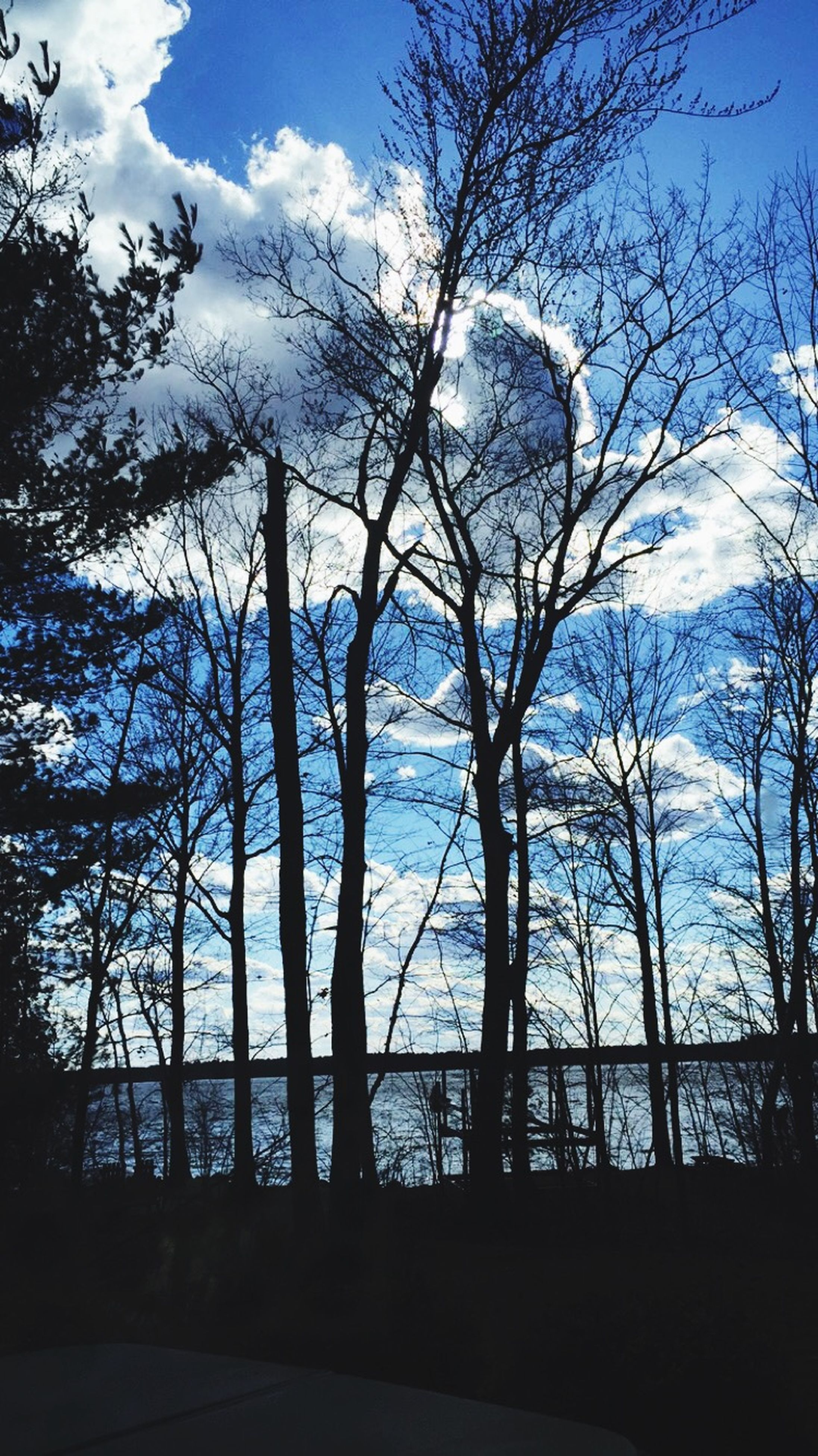 bare tree, tree, sky, silhouette, branch, tranquility, tree trunk, cloud - sky, nature, tranquil scene, low angle view, cloud, scenics, beauty in nature, blue, no people, outdoors, day, sunlight, growth