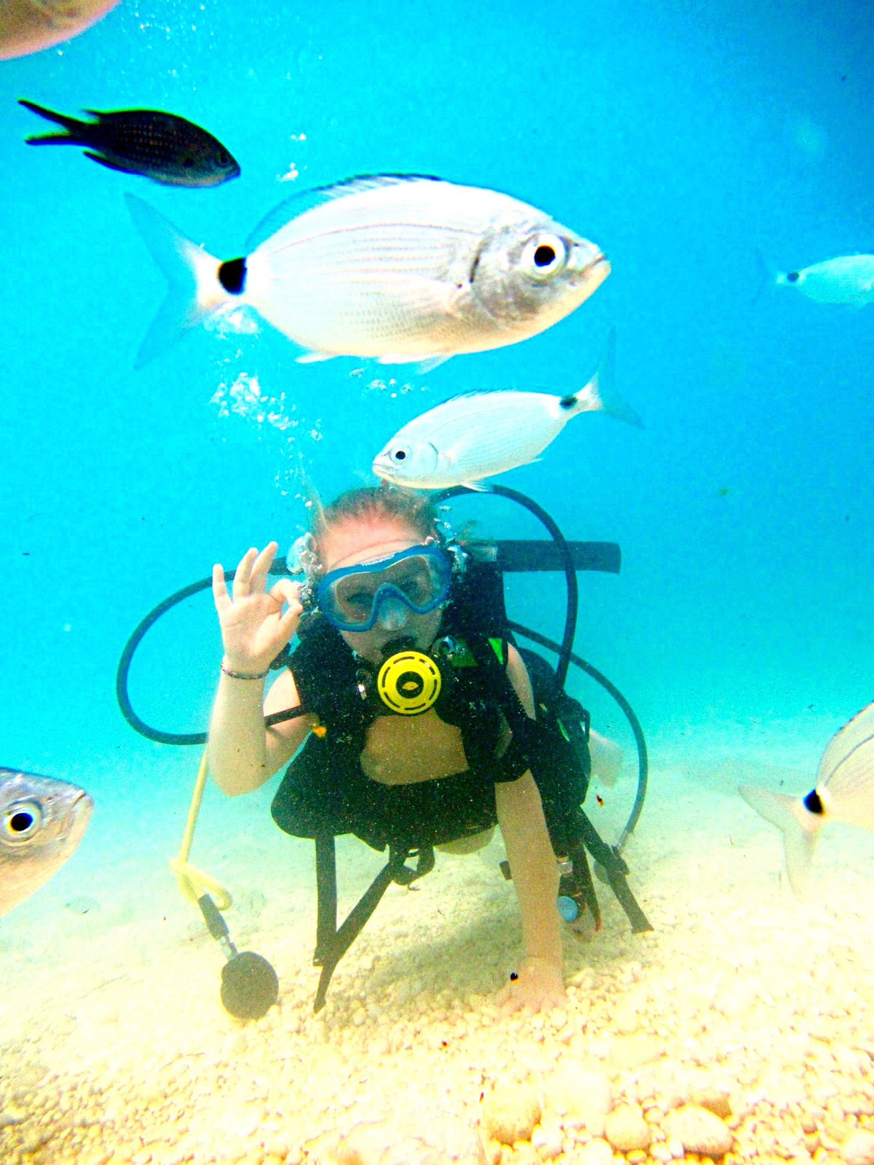 underwater, sea, undersea, fish, swimming, scuba diving, water, one animal, sea life, recreational pursuit, animal themes, diving equipment, adventure, animal wildlife, one person, nature, outdoors, close-up, aquarium, day, people