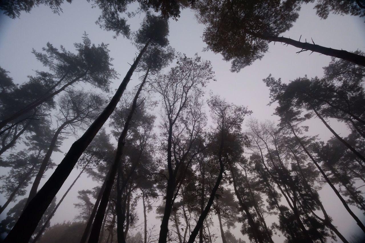 Tree Beauty In Nature Sky Japan Photography Silhouette Eyemphotography EyeEm Best Shots EyeEm Best Edits EyeEm Gallery Fujifilm_xseries X-PRO2 Fujifilm Beautiful Nature Nature Wabi-sabi Beauty In Nature