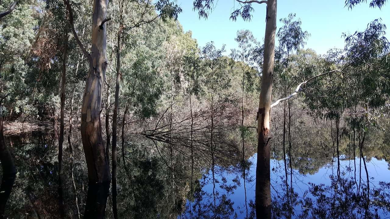 tree, nature, forest, growth, day, water, no people, outdoors, beauty in nature, tranquil scene, tranquility, plant, lake, branch, scenics, sky