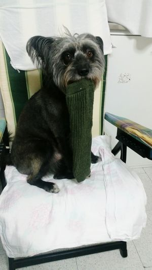 Bimbo Monello Ladro Calze Dog Pets I Love My Dog
