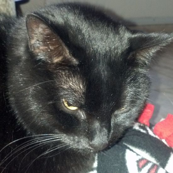 Don't be fooled... Blackcats Cat Catlovers Igcats catsofinstagram stlouiscardinalscats rescuepets