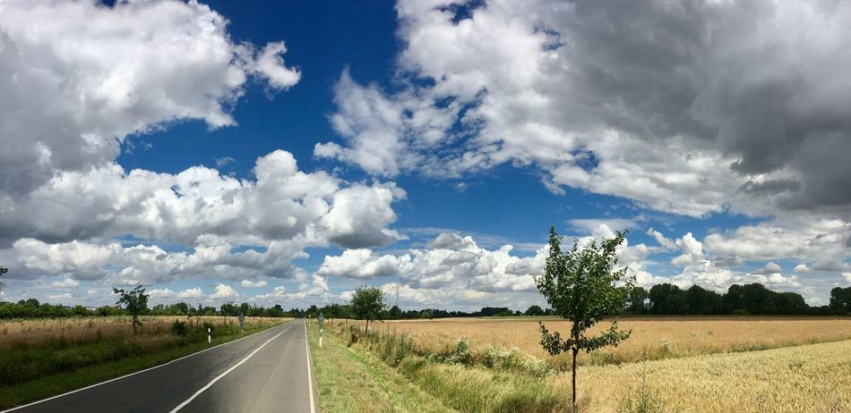 Massive Clouds Sunshine Road Field Of Wheat Summer Day Sun And Shadow Blue Sky Small Tree