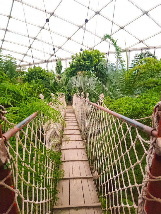 Taking Photos Hello World Hi! Check This Out Nature Great Feeling Impression Leipzigtrip Leipzig Zoo Suspension Bridge Bridge Tropical Tropical Paradise Tropical House Leipzigtravel Leipzigerzoo Enjoying Life No Fear Hanging Out Eyem Best Shots Nature_collection