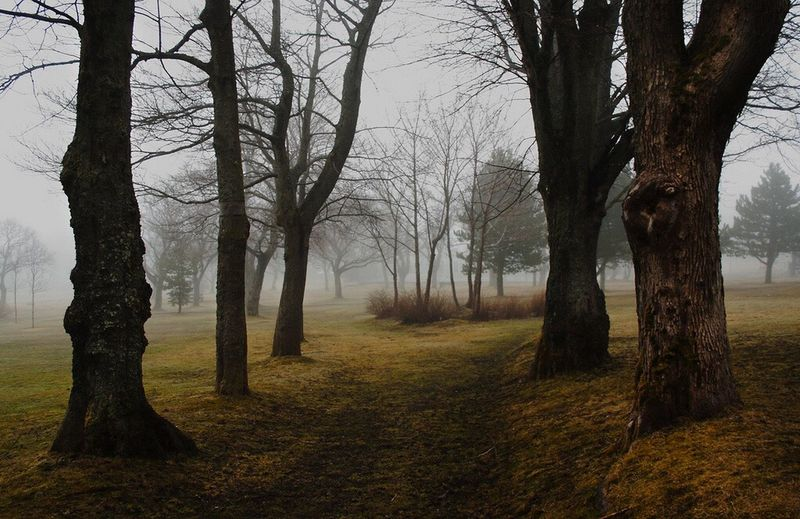 The Great Outdoors - 2017 EyeEm Awards Tree Outdoors Fog Yyt Canada Newfoundland Bannerman Park, St. John's, Canada First Eyeem Photo