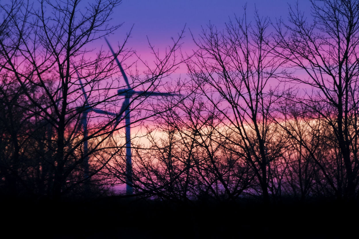 Bare Tree Beautiful Beautiful Sunset Beauty In Nature Blue Branch Clear Sky Cloud - Sky Dusk Growth Idyllic Low Angle View Nature Neon Color Neon Sunset No People Outdoors Pink Sky Scenics Silhouette Sky Sunset Tranquil Scene Colour Of Life Tree