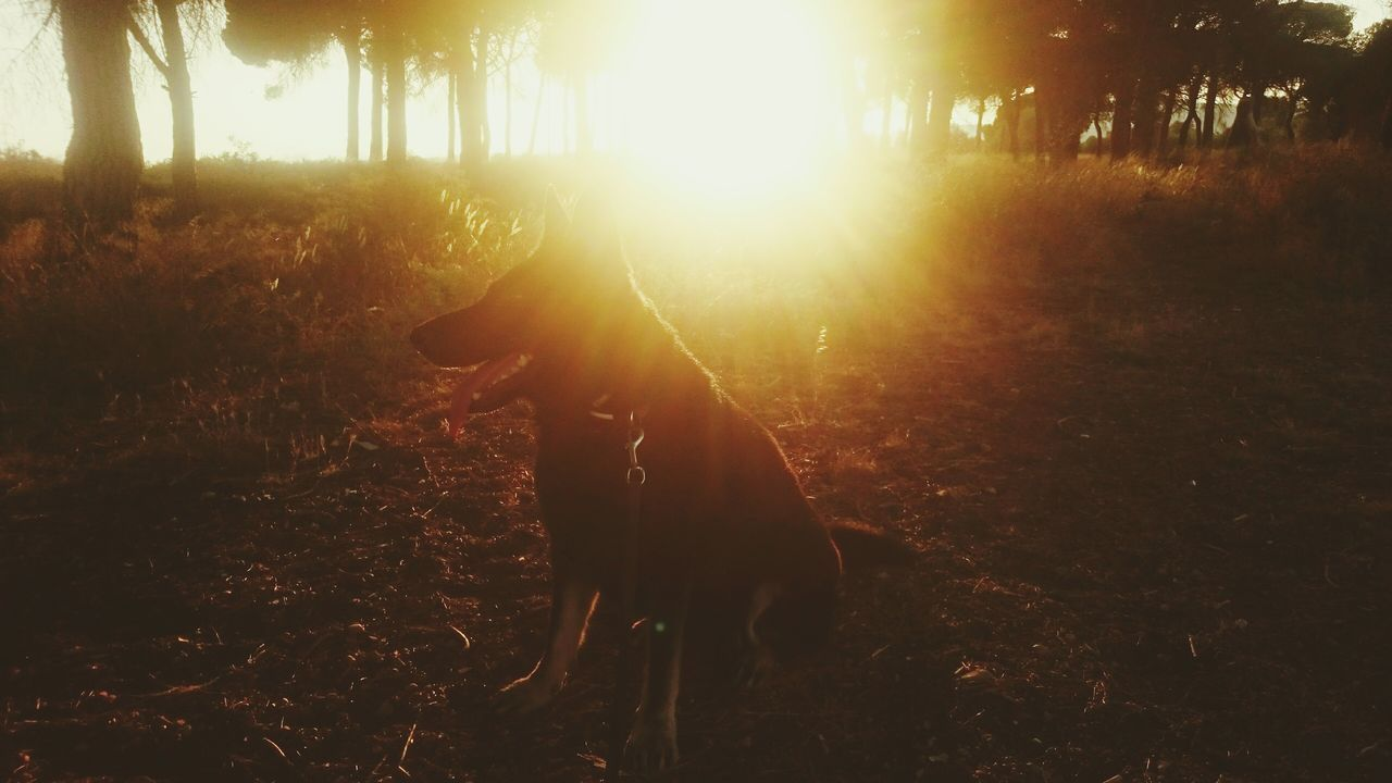 forest, nature, tree, sunlight, outdoors, sunset, growth, silhouette, grass, autumn, one person, landscape, beauty in nature, people