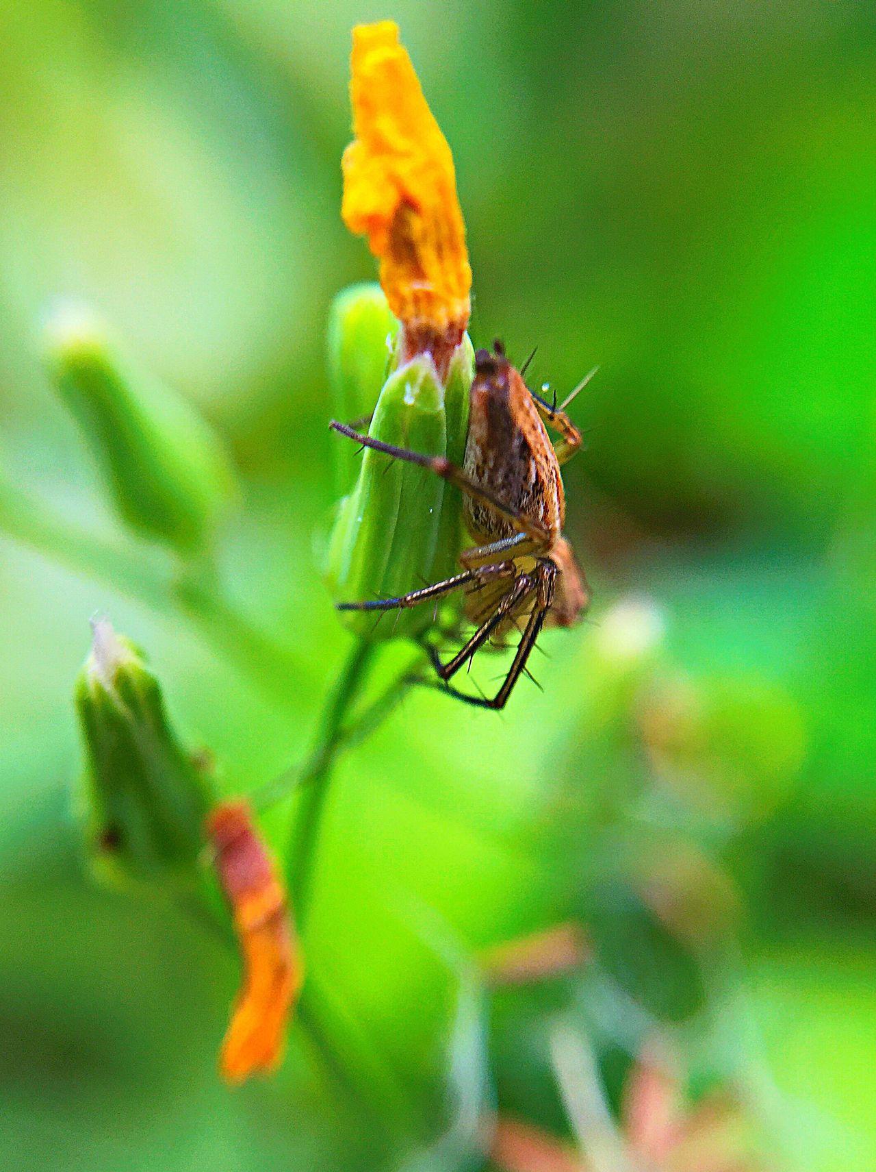Small spider