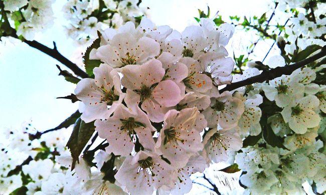 Hello World Hdr Edit Flowers