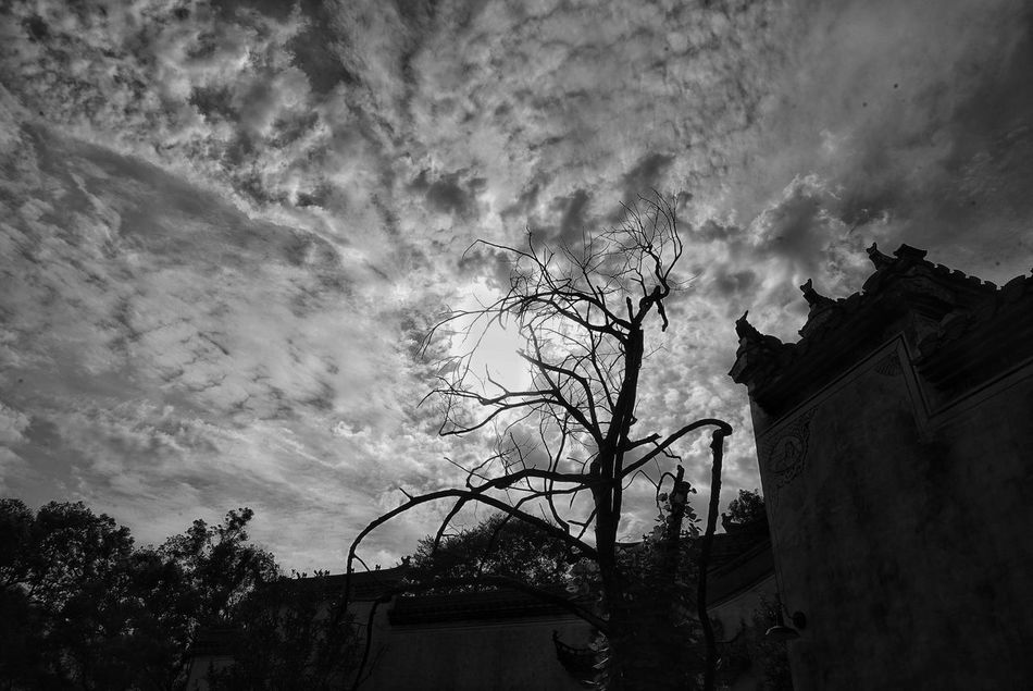 China Photos Light And Shadow Urban Plant Cloud And Sky Cloudpark Treepark Building Exterior Blackandwhite Travel Black And White Beauty In Nature Bnw Tree Cloud - Sky Low Angle View Bnw_life No People Architecture Built Structure Outdoors Nature Day Streamzoofamily Streamzoofamily Friends
