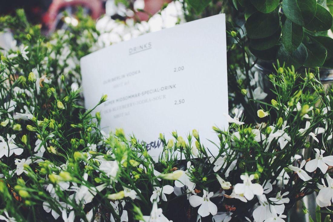 Flowers Drinks Summer Our/Berlin