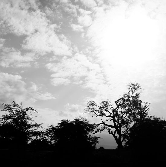 Beauty In Nature Blackandwhite Bnw Bnw_collection Bnw_friday_eyeemchallenge Bnw_worldwide Branch Day Low Angle View Nature No People Outdoors Scenics Silhouette Sky Tranquility Tree