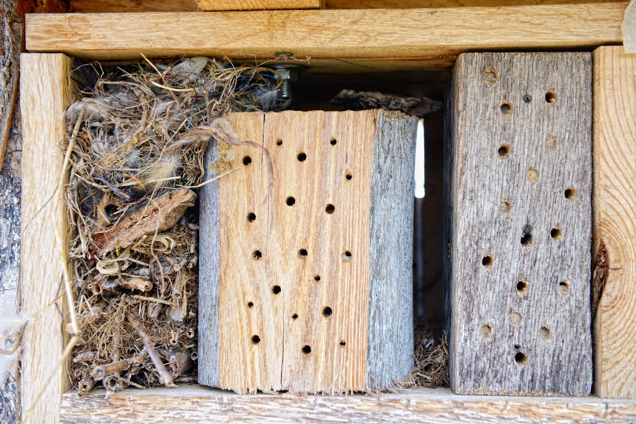 insect hotel made of wood and feathers. for wild bees Insektenhotel Bees Bee 🐝 Solitarybee Osmia Bicornis Insects  Insect Wildbee Wildbienen Solitary Bee Insect Hotel Insect Shelter Insektenhaus