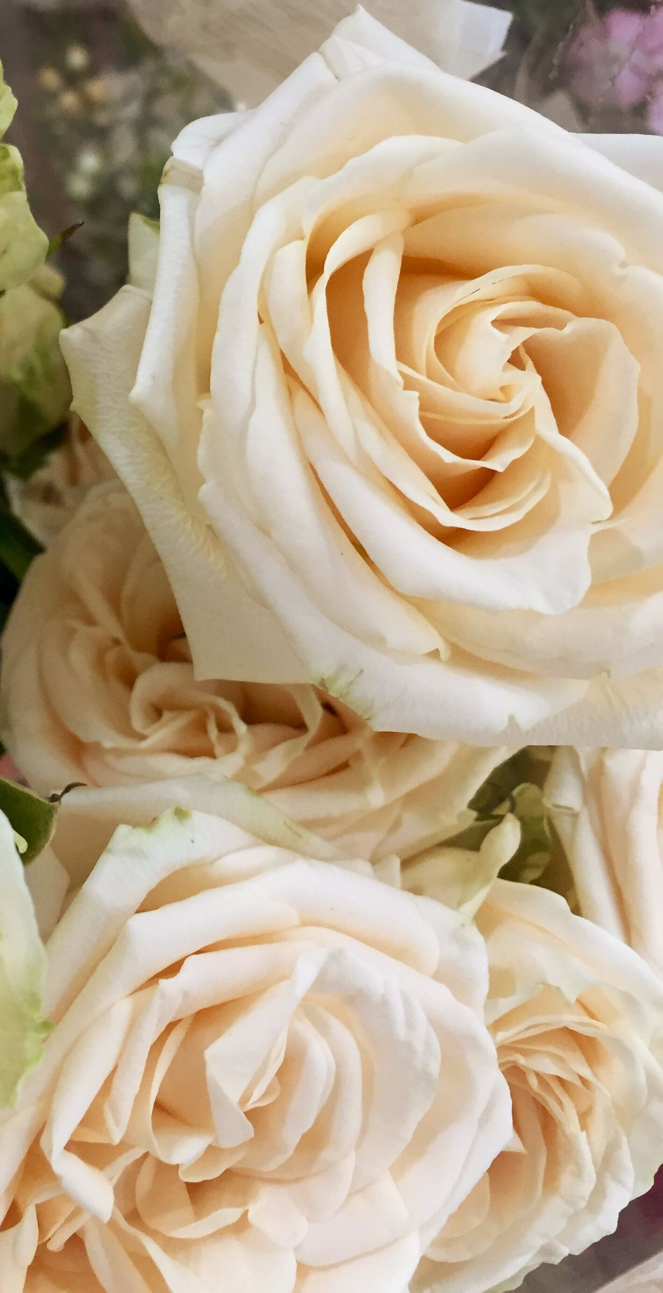 Flower Petal Freshness Flower Head Fragility Rose - Flower Beauty In Nature Close-up Rosé Nature In Bloom Bunch Of Flowers Growth Single Flower Yellow Springtime Softness Blossom Curled Up Day