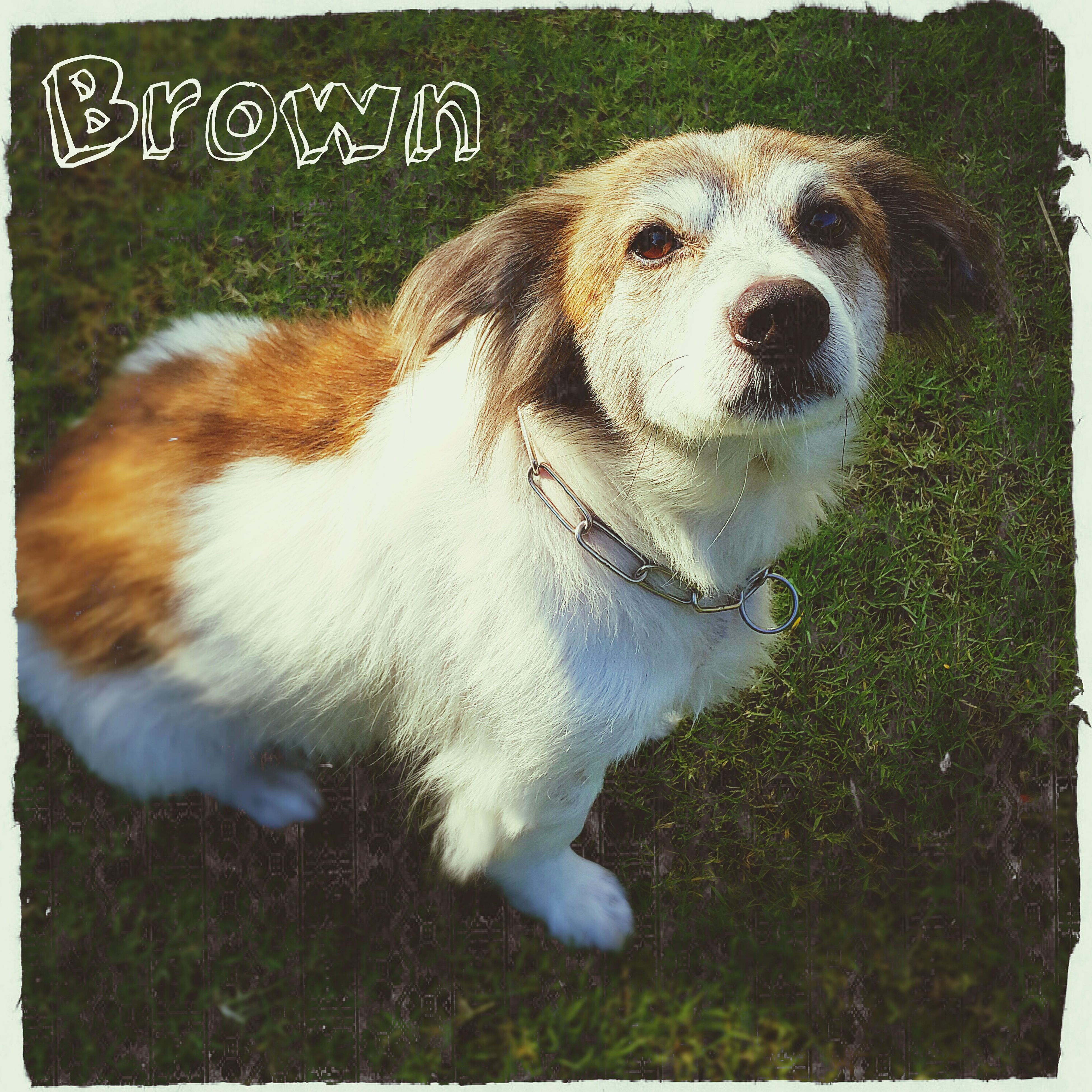 Introducing Mr. Brown, my big dog. Casa Presto Dog Days My Dog Is Cooler Than Your Kid. Dog Cute Pets Dogslife Hello World