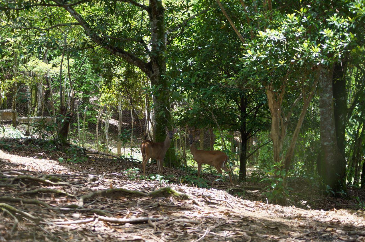 Venado Bosque Vida Salvaje Jardin De Dios Tapijulapa, Tabasco