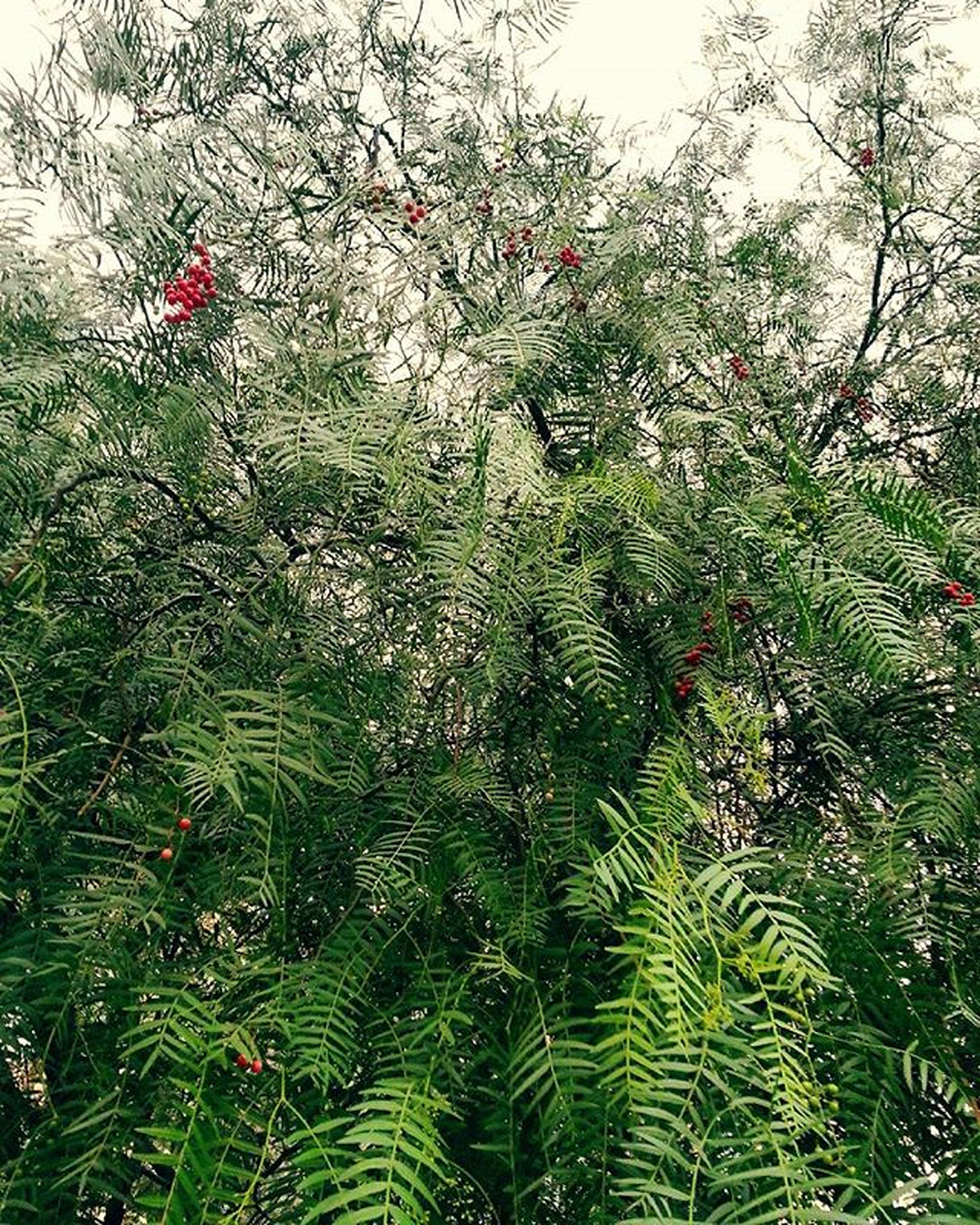 Jungle in CBD: 160513 Melbourne Australia Jungle in CBD Streetview Trees Leaves Green Waitingforsummer Sleepygiraffe 멜번 초록 정글 거리