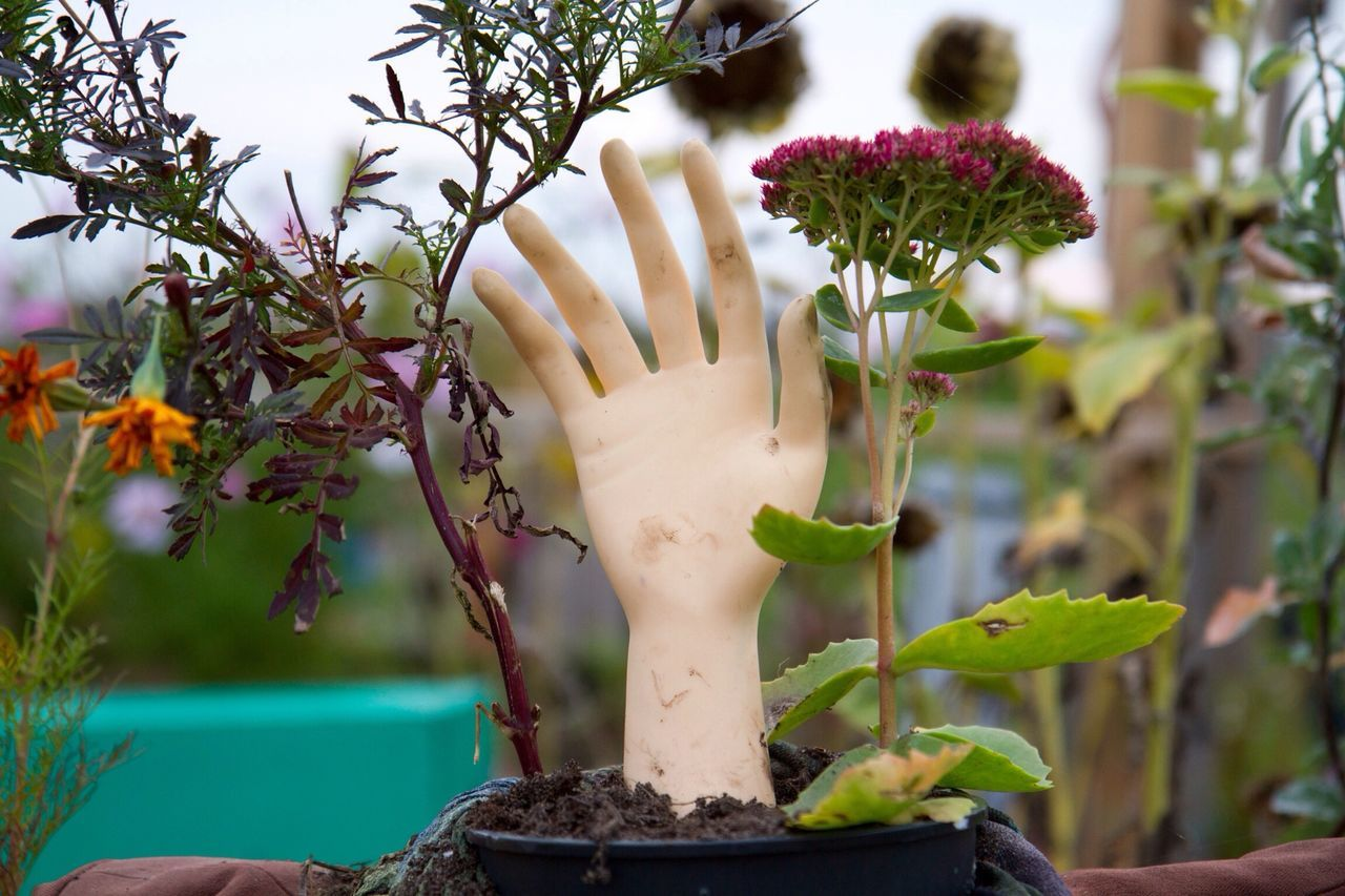 Beautiful stock photos of hand, Abandoned, Berlin, Blooming, Cropped
